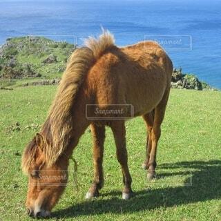 自然,空,動物,屋外,草原,茶色,沖縄,景色,うみ,草,馬,放牧,日中,与那国島