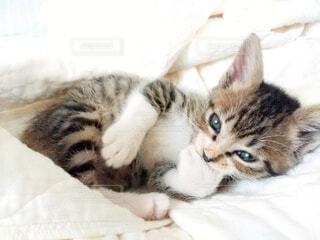 手を加えて横たわる子猫の写真・画像素材[4070886]