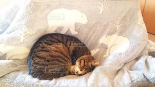 しろくま柄のこたつ布団の上で寝ている猫の写真・画像素材[4076698]
