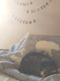 こたつ布団の上で寝ている猫の写真・画像素材[4077308]