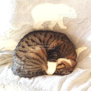 こたつ布団の上でくるまって寝ている猫の写真・画像素材[4077404]