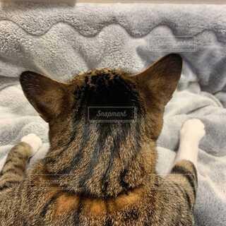 こたつと真上から撮った猫の頭の写真・画像素材[4081142]