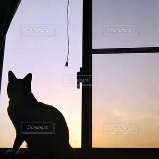猫,自然,風景,動物,朝日,窓,シルエット,ねこ,日の出,お見送り