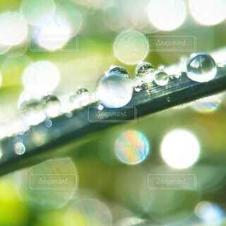 雨あがりの雫の写真・画像素材[4102746]