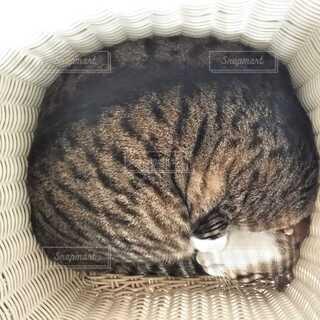 洗濯かごの中の猫の写真・画像素材[4119331]