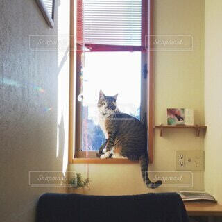 部屋の一角と猫の写真・画像素材[4152268]