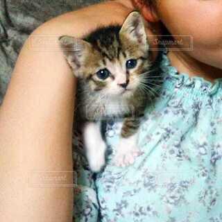 女の子と猫の写真・画像素材[4163301]