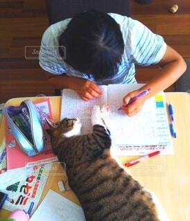 勉強中の女の子と猫の写真・画像素材[4163459]