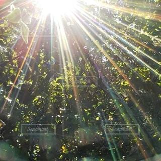 太陽の光の写真・画像素材[4415313]