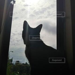 窓と猫の写真・画像素材[4417913]
