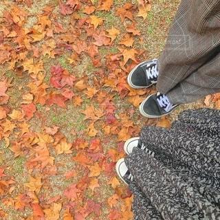 足元の落ち葉の写真・画像素材[4450438]