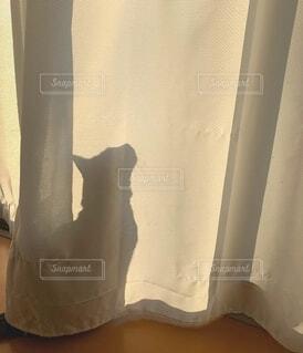 カーテンの猫の影の写真・画像素材[4450447]