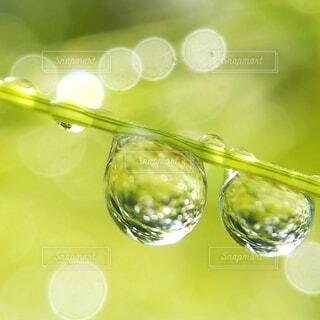 雨あがりの草のしずくの写真・画像素材[4540024]