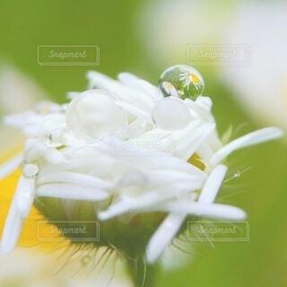 花のクローズアップの写真・画像素材[4540172]