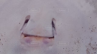 魚,水族館,沖縄,泳ぐ,癒し,マンタ,笑