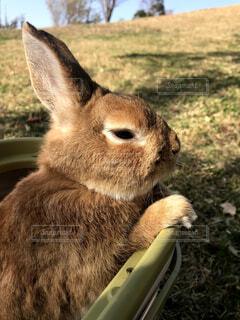 公園,動物,うさぎ,ふわふわ,ペット,可愛い,お散歩,ふわもこ,ウサギ,バニー