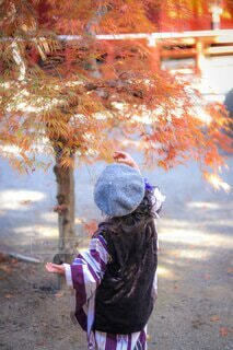 女性,家族,風景,花,秋,冬,アクセサリー,傘,雪,屋外,太陽,朝日,赤,かわいい,晴れ,青,虹,紫,木漏れ日,女の子,ドレス,ベレー帽,落ち葉,樹木,着物,人,スカーフ,写真,正月,飴,銀杏,寒い,地面,お正月,日の出,若い,お洒落,一眼レフ,新年,初日の出,11月,12月,お出掛け,3歳,簪,753,被布,少し,ベロア,座,千歳飴,人間の顔,被布着物