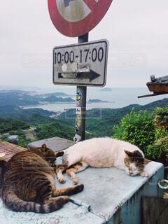 看板の上に横たわっている猫の写真・画像素材[4368654]