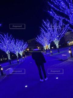 冬,夜,樹木,クリスマス,明るい,クリスマス ツリー