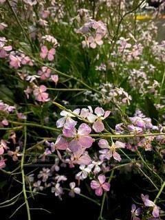 花,春,屋外,景色,お花,たくさん,ツツジ,一眼レフ,草木,素人,ガーデン,ブルーム,ブロッサム,素人撮影,フローラ
