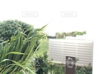 空,芝生,屋外