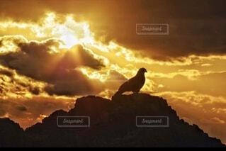 自然,海,空,鳥,屋外,太陽,雲,夕暮れ,山,鳶