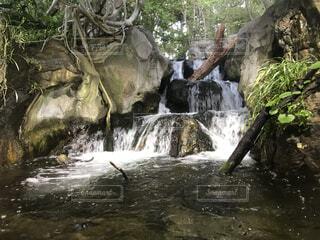 森林,森,緑,水,川,水面,滝,樹木,芸術,草木