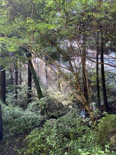 自然,風景,森林,木,屋外,景色,樹木,新緑,ジャングル,草木,エリア