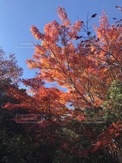 自然,風景,空,秋,葉,落葉,草木,カエデ