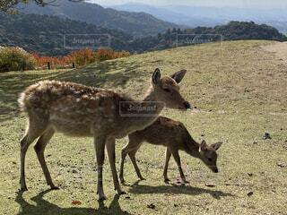 風景,動物,景色,鹿,奈良