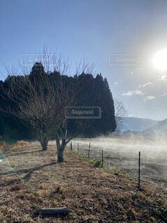 自然,風景,空,木,屋外,森,雲,青空,青,ウォーキング,林,田舎,霧,荘厳,壮大,大自然,楽しい,樹木,大地,神秘的,正月,柵,お正月,日の出,新鮮,無人,blue,神秘,新年,田舎道,初日の出,徘徊,morning,爽快,草木,明け方,気持ちいい,朝もや,朝霧,体,日中,早起き,大草原,sun,もや,かすみ,構図,果てしない,上昇,健やか,Field,fantasy,映える,気流,mist,朝かすみ,ちりひとつない,霧化粧