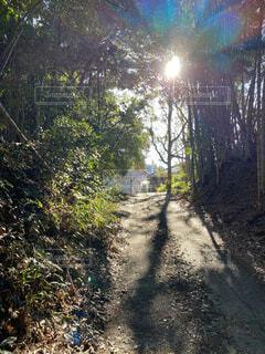自然,空,森林,屋外,太陽,朝日,散歩,樹木,正月,地面,お正月,日の出,新年,草木,日中,sun
