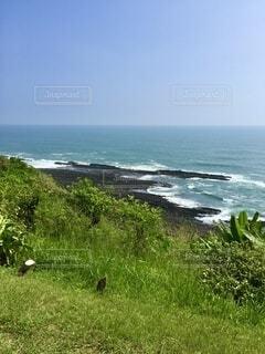 自然,風景,海,空,屋外,緑,ビーチ,青空,岩場,水面,海岸,景色,水平線,草,新緑,雄大,さわやか,岬,太平洋,草木,眺め,広大,日中,しぶき,山腹,はれやか