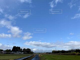 風景,空,屋外,草原,雲,青空,青,景色,草,樹木,新緑,地平線,山並み,群れ,地球,くもり,クローズアップ,広大,広がり,日中,引き