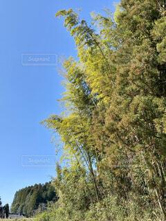 自然,風景,空,秋,森林,屋外,森,晴れ,青空,景色,背景,樹木,竹,空間,草木,目にしみる