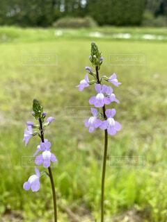 道端の花のクローズアップの写真・画像素材[4321304]