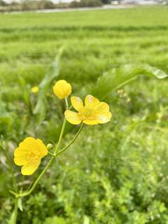 道端の花のクローズアップの写真・画像素材[4321307]