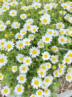 庭の花の写真・画像素材[4383594]
