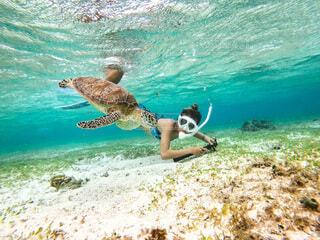 海,屋外,波,泳ぐ,ウミガメ,シュノーケル