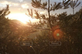 自然,風景,空,屋外,太陽,朝日,樹木,正月,お正月,日の出,明るい,新年,初日の出,草木,針葉樹