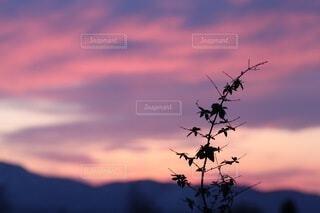 自然,空,屋外,雲,夕暮れ,山,シルエット,オレンジ,樹木,くもり,草木