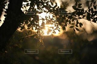自然,空,夕日,屋外,夕焼け,夕暮れ,葉,日光,シルエット,樹木,景観,草木