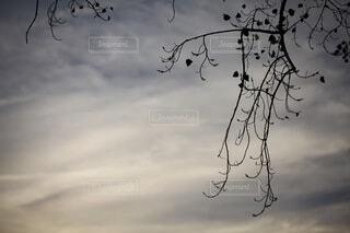 空,屋外,雲,枝,葉,樹木,曇り空,くもり,落葉,草木