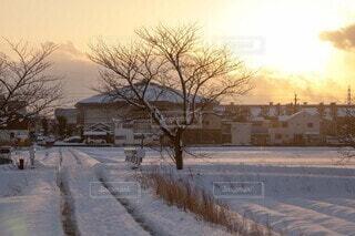 自然,風景,空,冬,夕日,雪,屋外,樹木,道,冷たい,ガードレール,轍,覆う