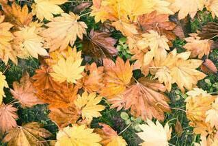 秋,カラフル,綺麗,葉,落葉,草木,キレイ