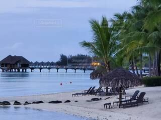 ビーチ,砂浜,海岸,ヤシの木