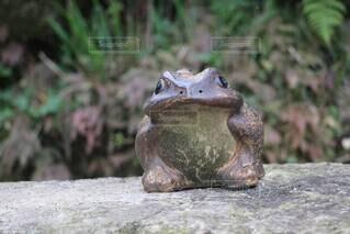 屋外,岩,日本,和,梅雨,カエル