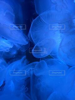 動物,魚,水族館,水中,クラゲ,コバルトブルー,クラ ゲ,刺胞動物,海洋生物学