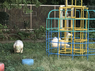 公園,動物,屋外,草,フェンス,遊び場,ホラー,廃れ