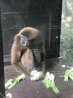 猿,動物,屋外,悲しい,憂鬱,しょんぼり,黄昏,霊長類,サル,虚しい,感情,虚無
